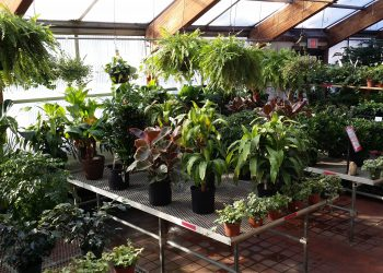 best online store for house plants
