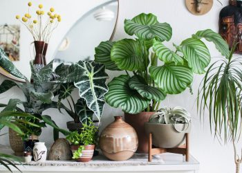 houseplants for beginners 101