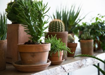 10 Secrets to Successful Houseplants from the Experts