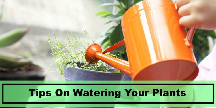 best tips to watering your house plants