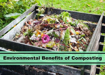 house plant composting and environmental benefits