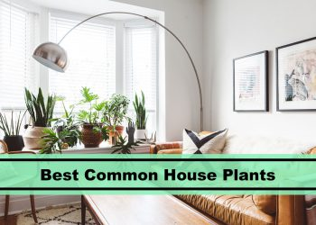 best common house plants to care for