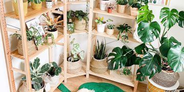 tips and ideas for home decorating with plants