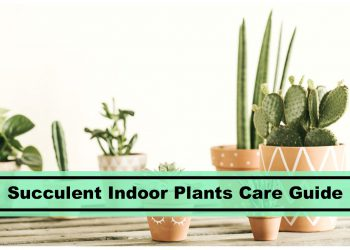 succulent indoor plants