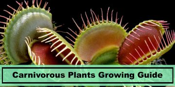 growing carnivorous plants indoors guide