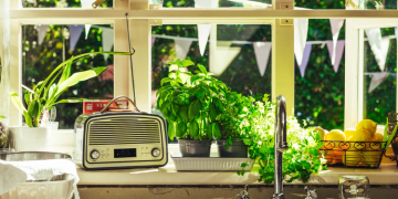 growing herbs in the kitchen