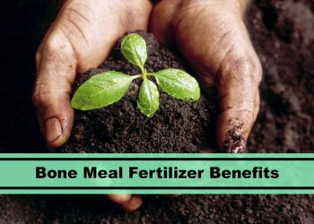 bone meal fertilizer featured image