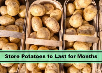 store potatoes for months