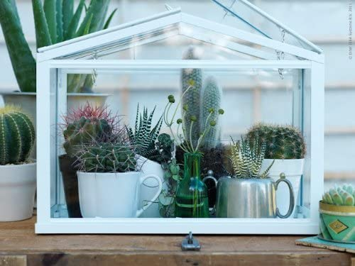 miniature garden house with succulents inside