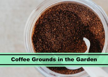 fresh coffee grounds