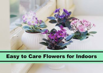 Easy flowers to care for indoors