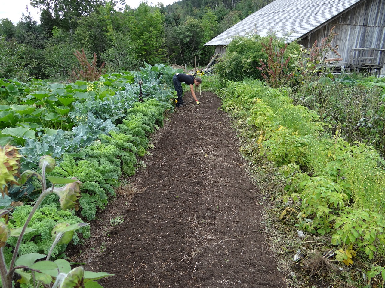 Lots of perennial vegetables in a farm