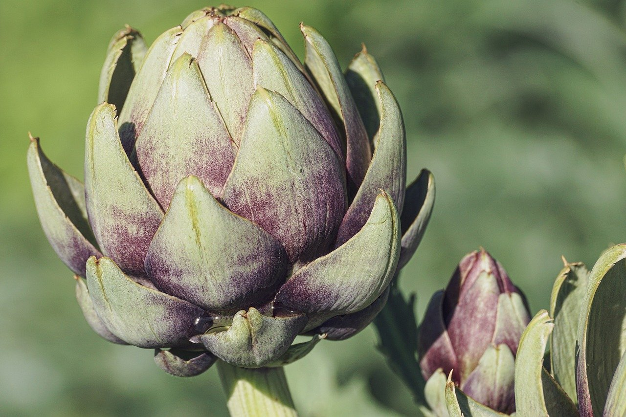 close up of artichoke