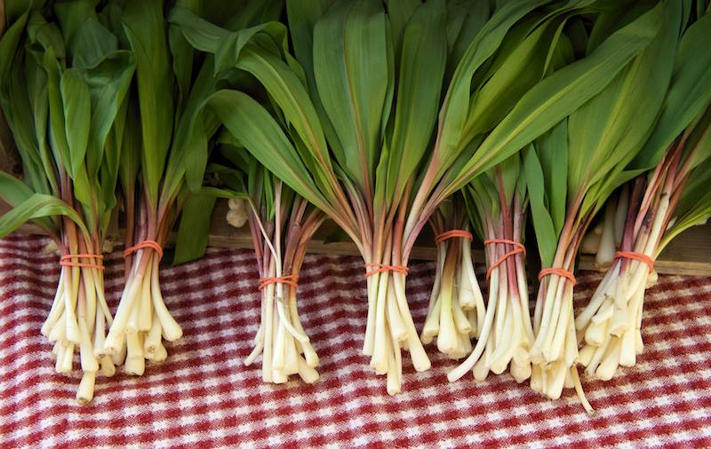 harvested Wild Leeks bundle