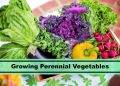 Ultimate List of Perennial Vegetables To Plant In Your Garden