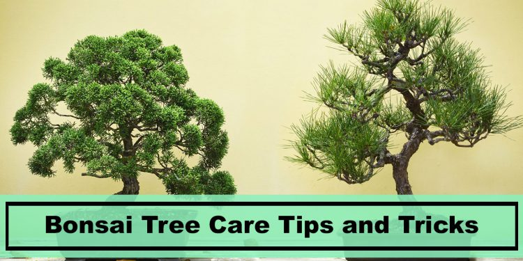 find out what bonsai tree needs to grow