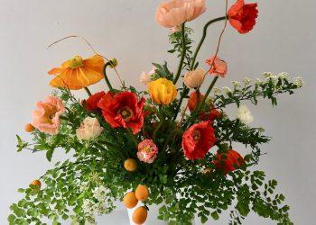 growing poppy flowers indoors