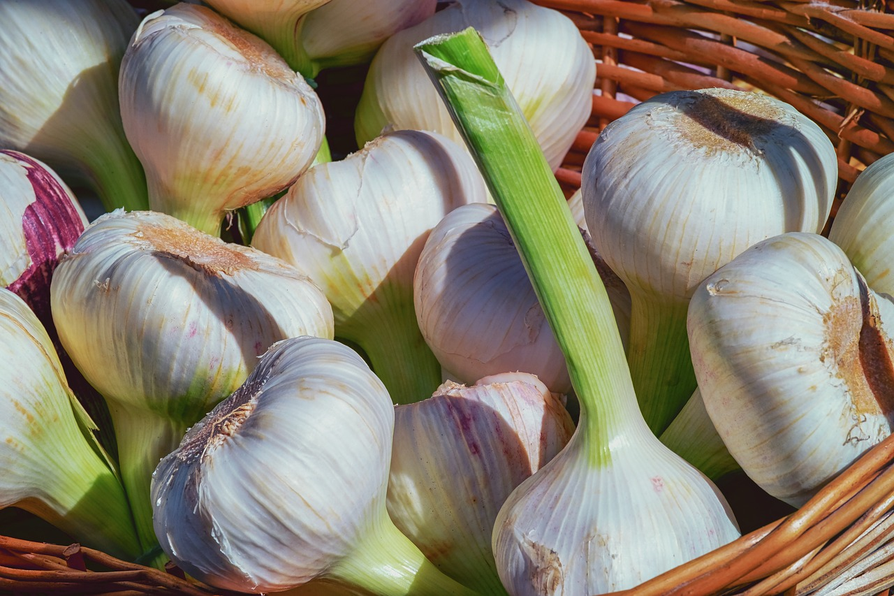 bundle of Hardneck garlic