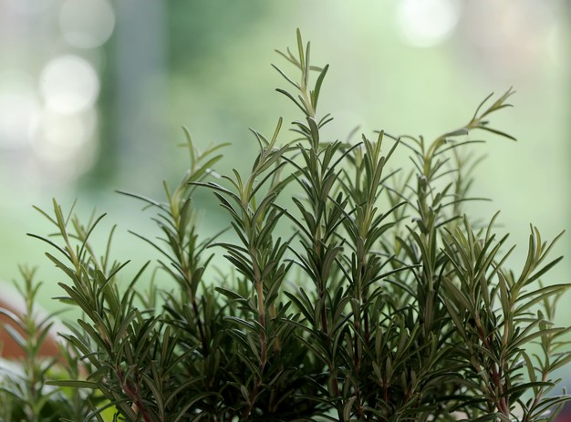 picnic basket herbs