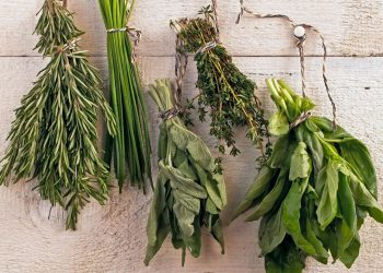 upside down dry herbs hanging