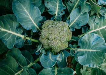 top view of broccoli