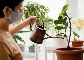 woman taking care of a zz plant with a watering can