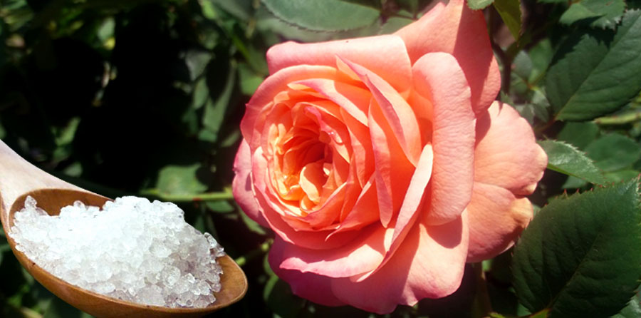 epsom salt with roses
