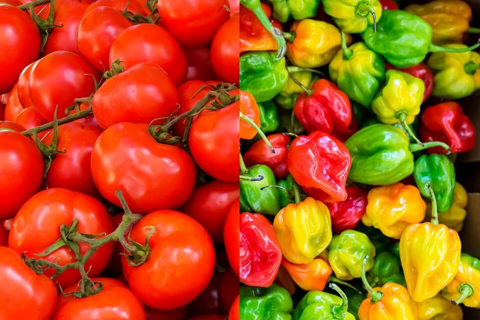 red tomatoes on left, colorful peppers on right