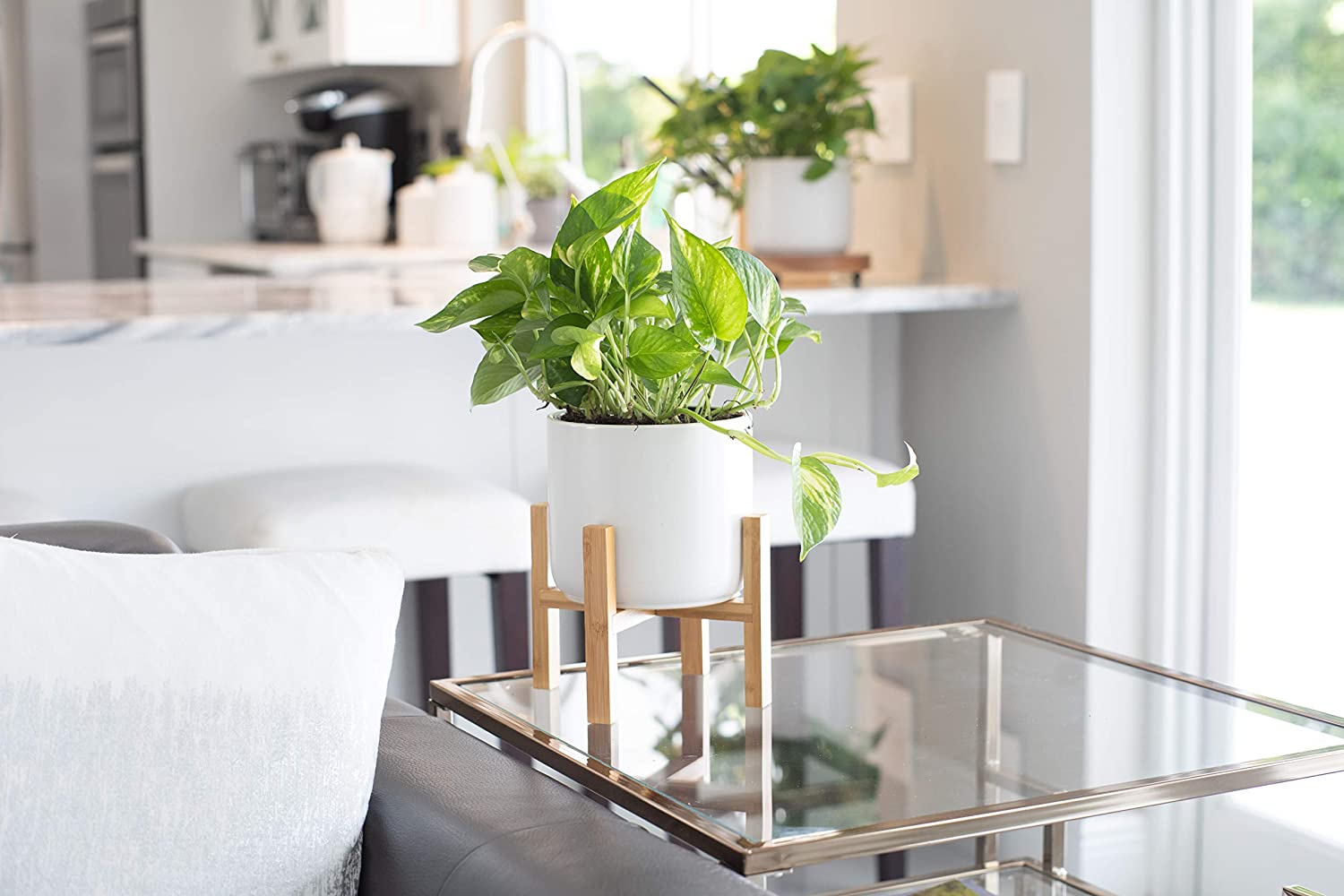 mid century planter with golden devils ivy pothos