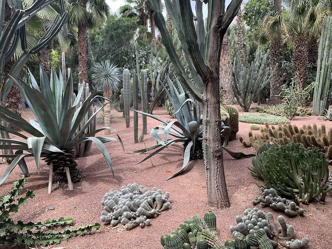 garden photograph of cactus, trees, shrubs