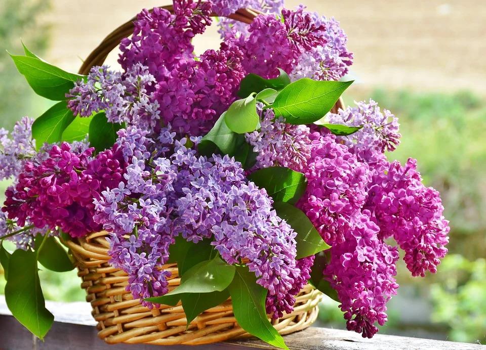 basket of florals