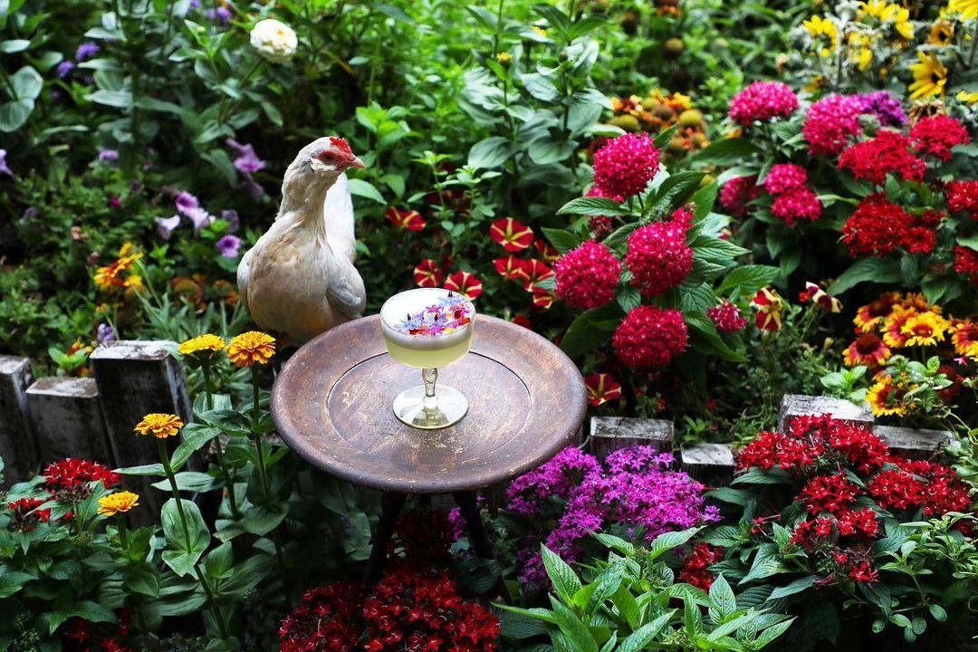 Bird next to a coctail in the garden