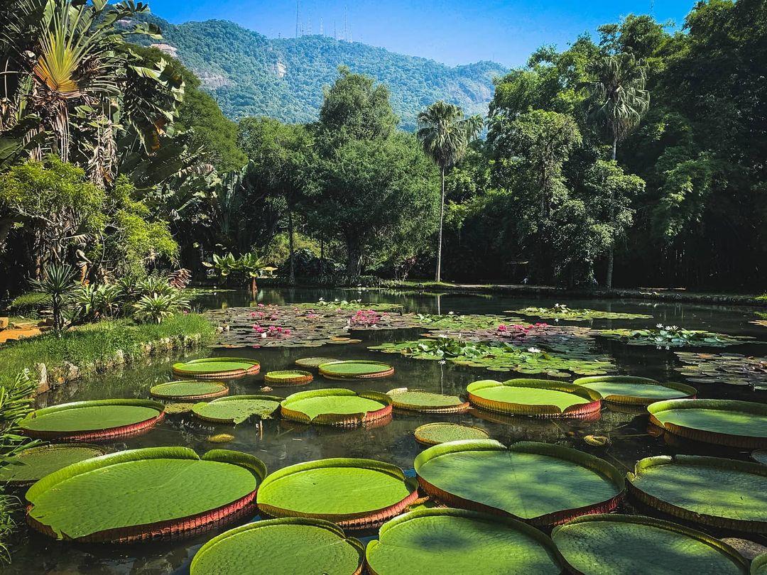 pond in jardim botanico rio de janeiro