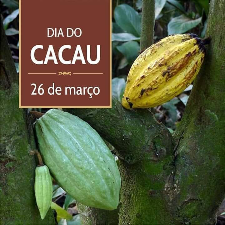 Cacao jardim botanico rio de janeiro