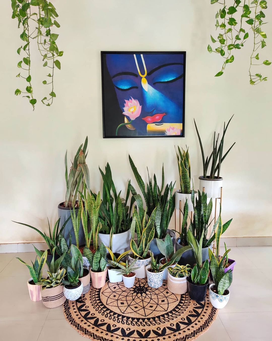 a group of snake plants