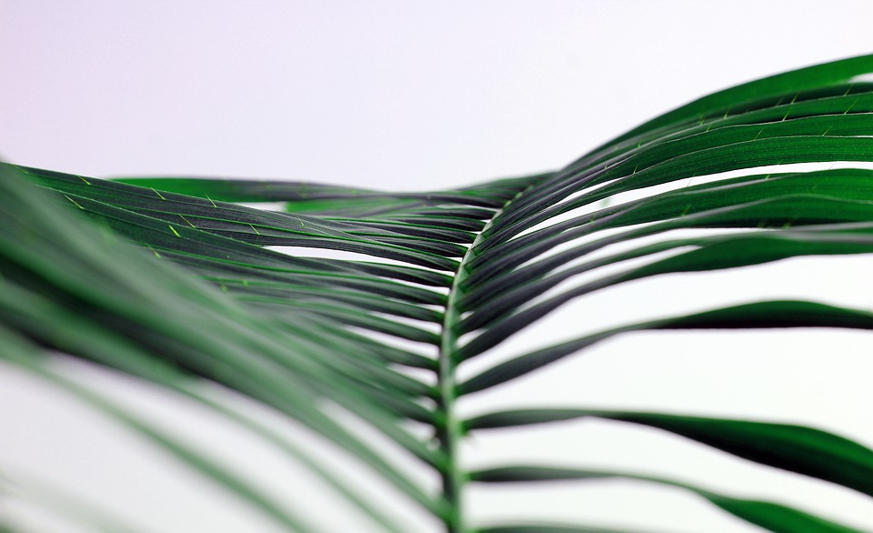 butterfly palm leaves