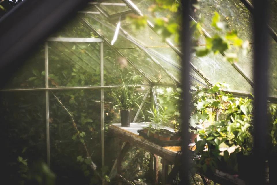 a peek into a greenhouse