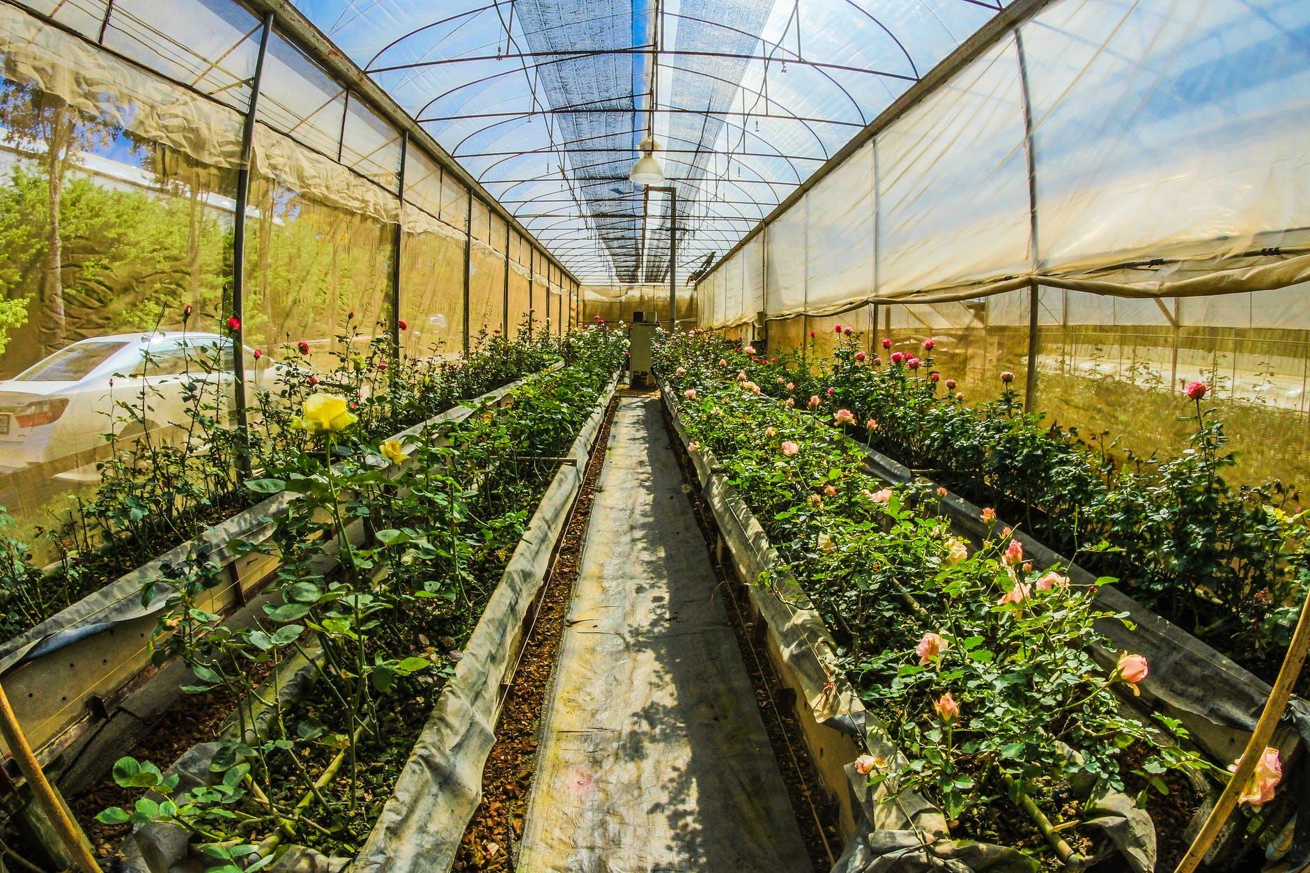 peak into a greenhouse garden