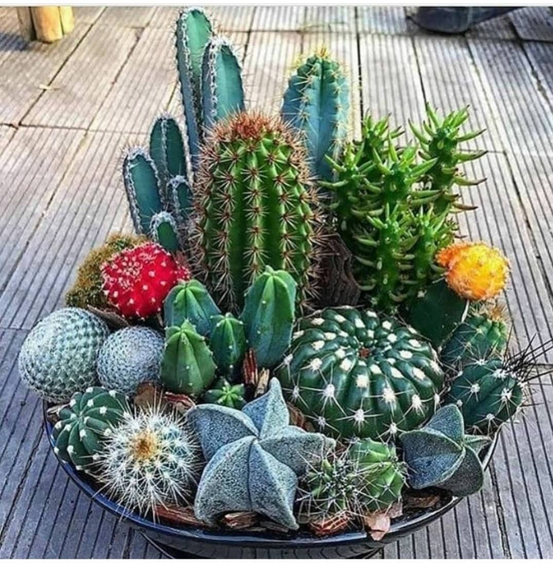 arrangement of cacti