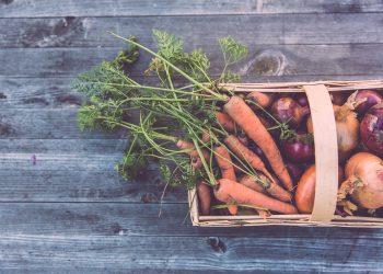 basic full of vegetables