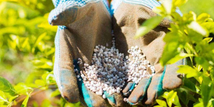 10-10-10 Fertilizer: What is it and how to use it for your plants
