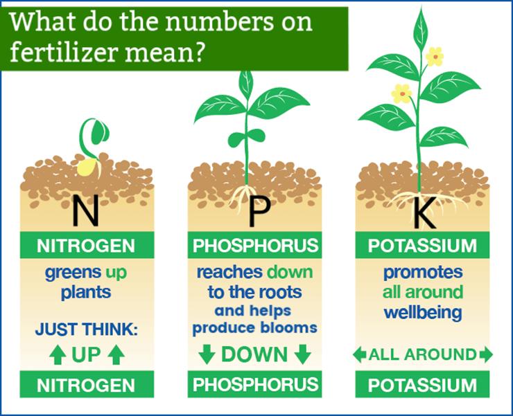 explains what nitrogen phosphorus and potassium does