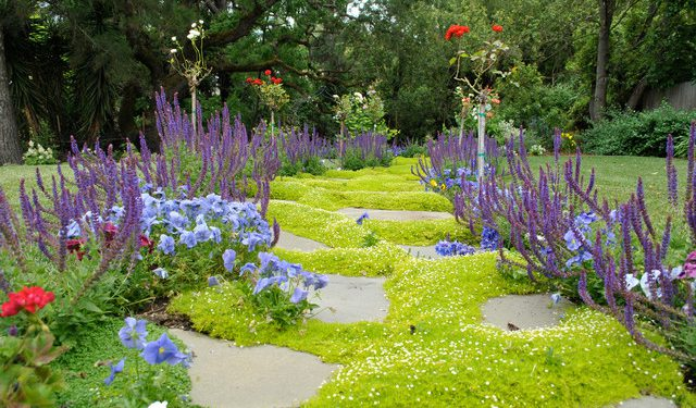 ground cover plants landscape