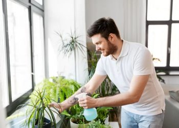 man spraying houseplants with hydrogen peroxide