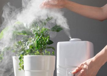 Plant Humidifier – Best Humidifier For Plants 2021 Guide