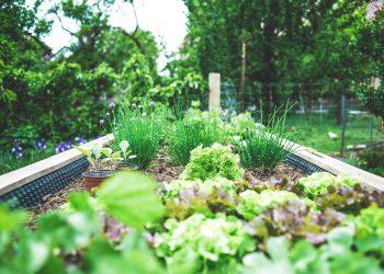 urban garden raised bed