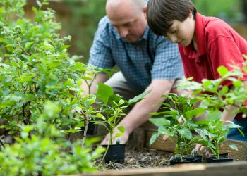boy and dad working in the garden