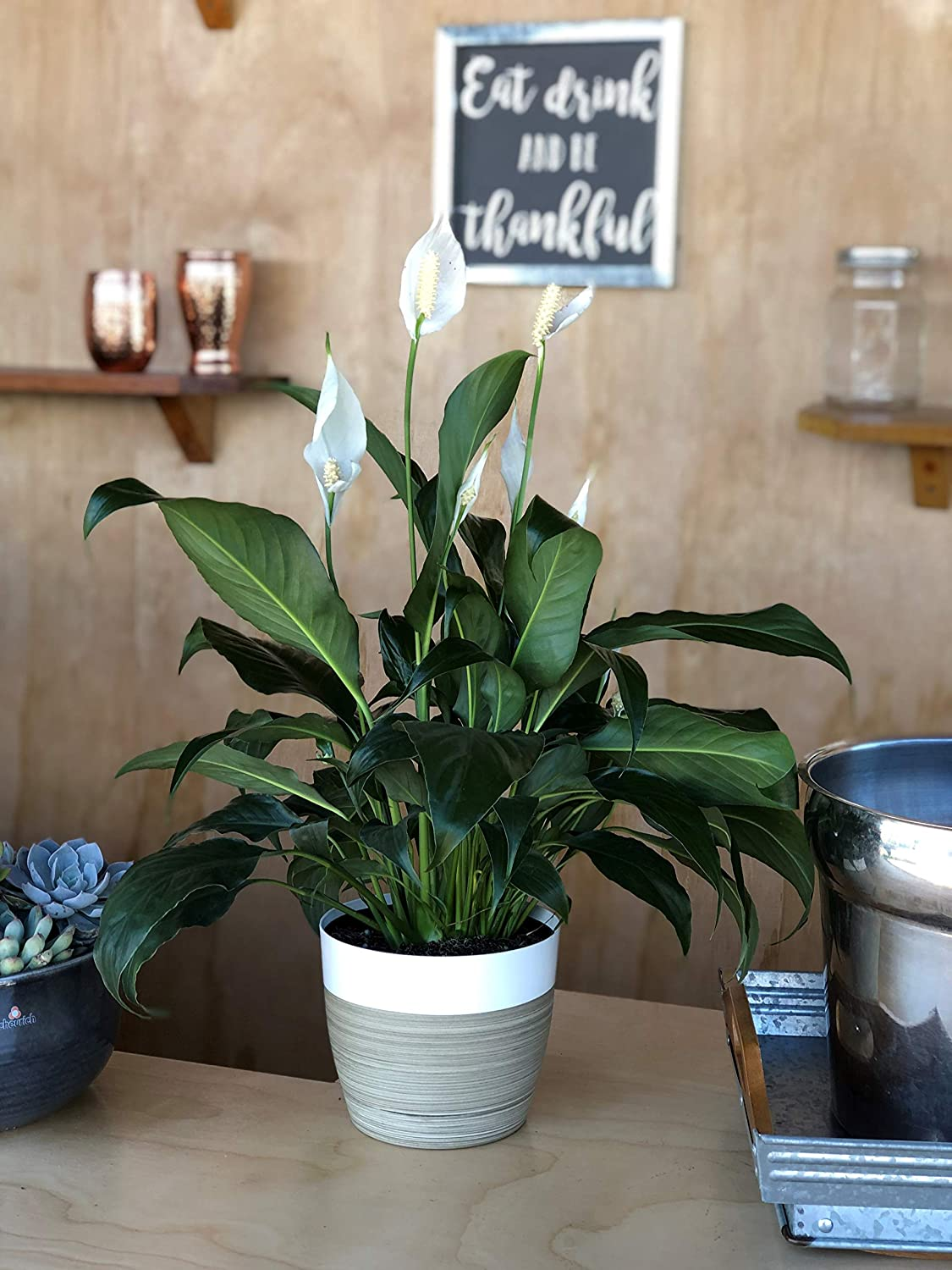 peace lily bloom on desk
