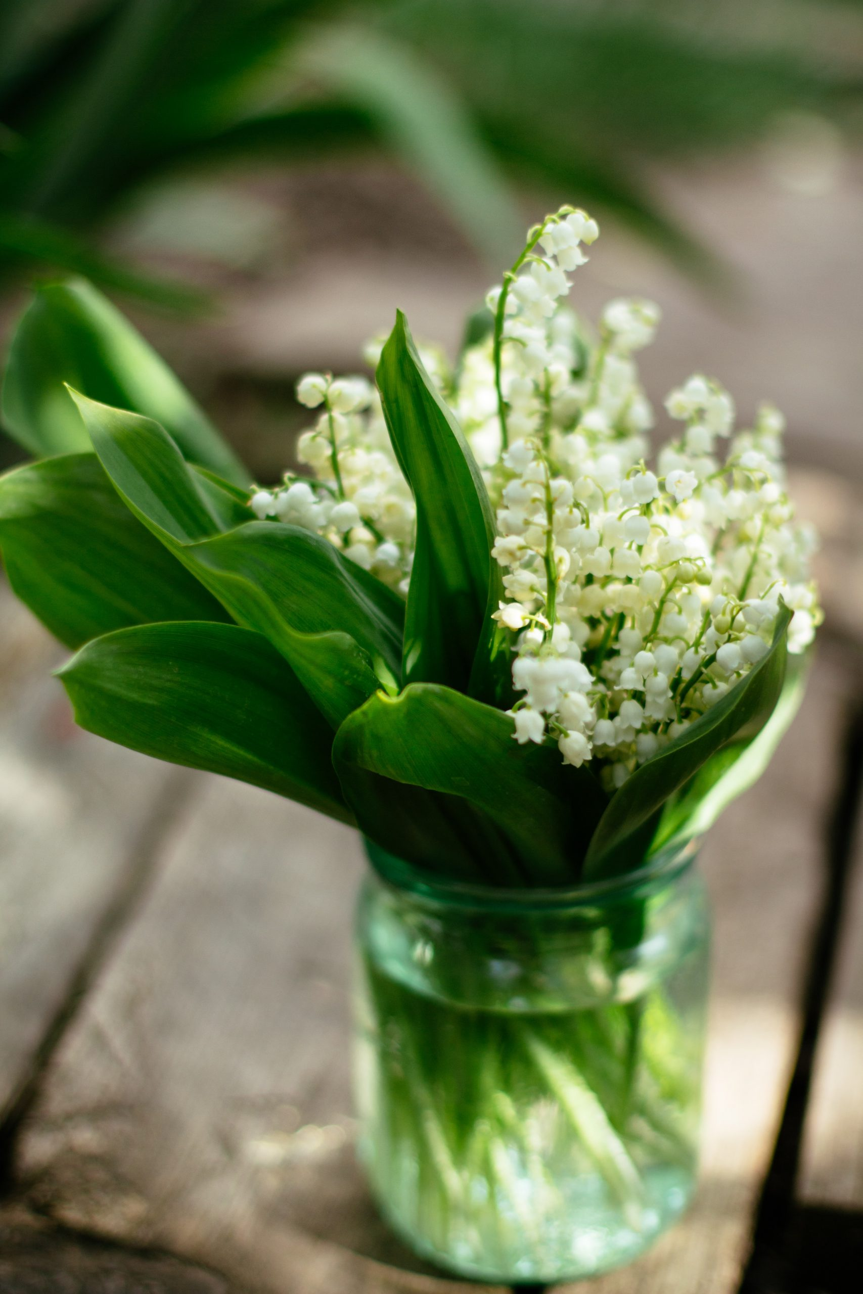 lily of the valley in a vase