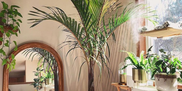 beautiful interior decoration indoor plant parlor palm